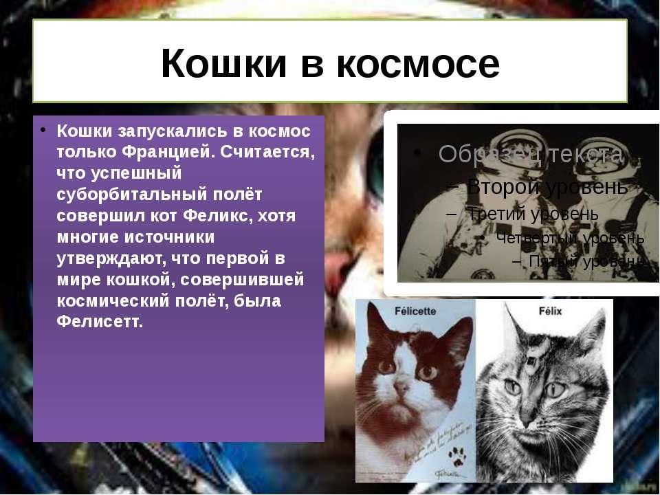 Кішки в космосі Кішки запускалися в космос тільки Францією. Вважається, що ус...