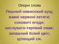 Опорні слова Пишний невисокий кущ; важкі червоні кетяги; соковиті ягоди; кисл...