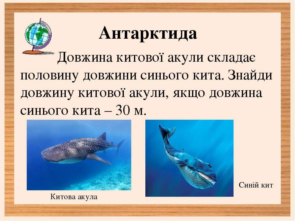 Антарктида Довжина китової акули складає половину довжини синього кита. Знайд...