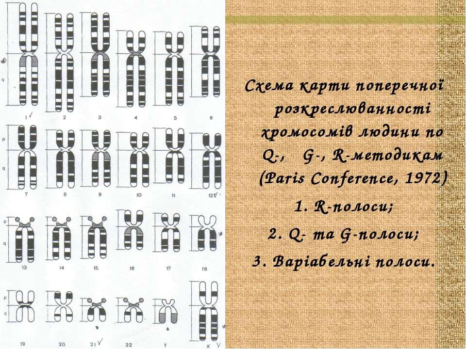 Схема карти поперечної розкреслюванності хромосомів людини по Q-, G-, R-метод...