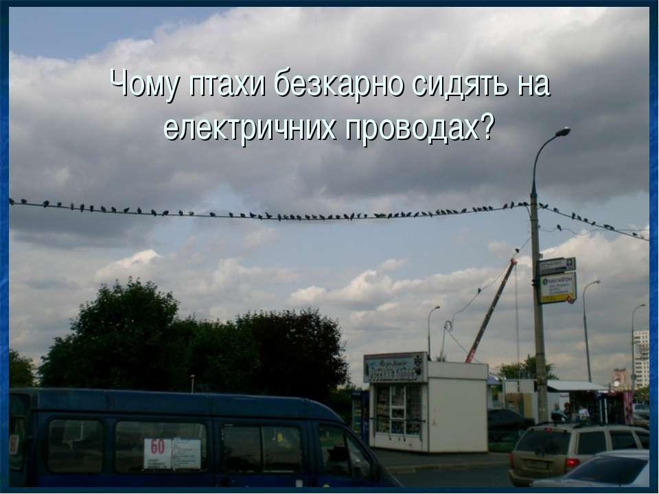 Чому птахи безкарно сидять на електричних проводах?