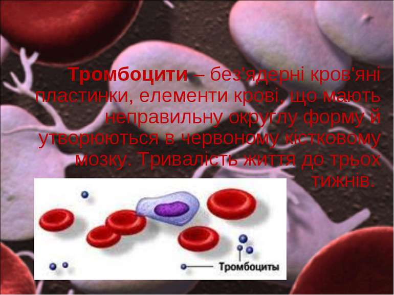 Тромбоцити – без'ядерні кров'яні пластинки, елементи крові, що мають неправил...