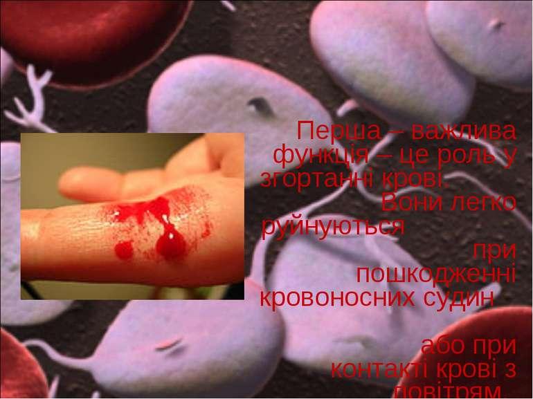 Перша – важлива функція – це роль у згортанні крові. Вони легко руйнуються пр...