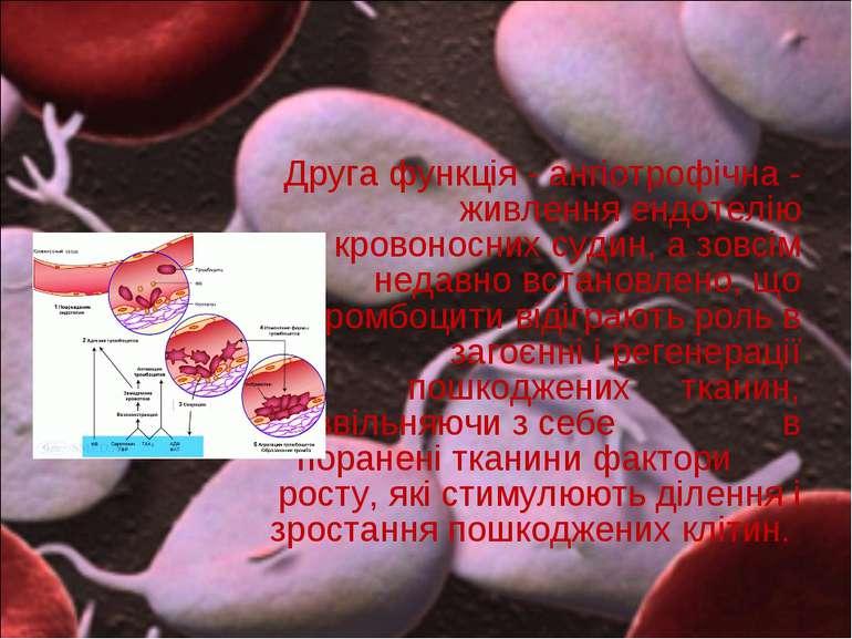 Друга функція - ангіотрофічна - живлення ендотелію кровоносних судин, а зовсі...