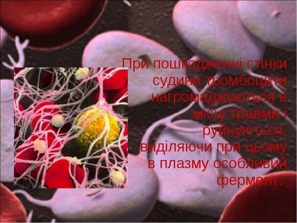 При пошкодженні стінки судини тромбоцити нагромаджуються в місці травми і руй...