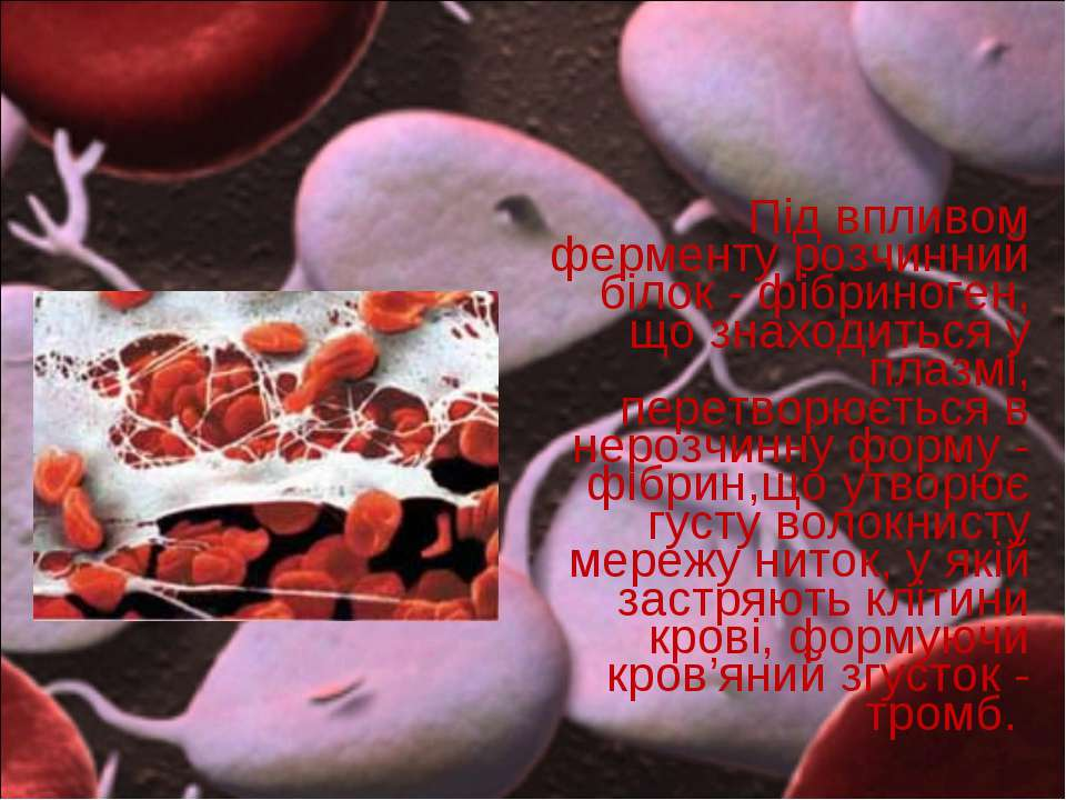 Під впливом ферменту розчинний білок- фібриноген, що знаходиться у плазмі, п...