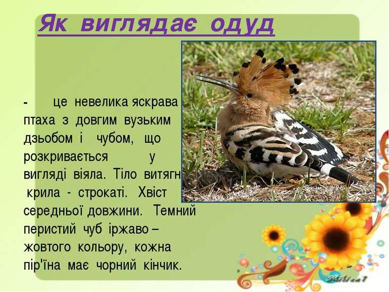 Як виглядає одуд - це невелика яскрава птаха з довгим вузьким дзьобом і чубом...