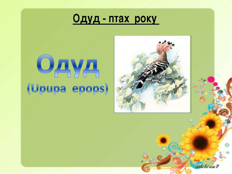 Одуд - птах року
