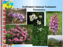 Особливості природи Львівщини: Рослинність