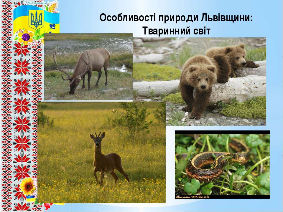 Особливості природи Львівщини: Тваринний світ