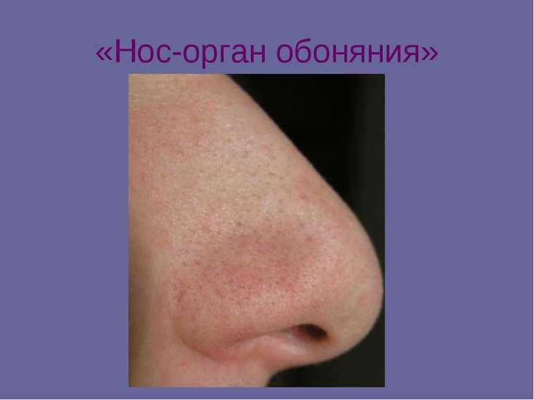 «Нос-орган обоняния»