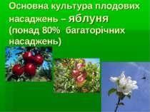 Основна культура плодових насаджень – яблуня (понад 80% багаторічних насаджень)