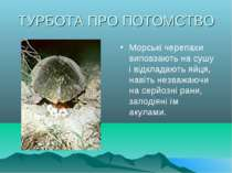 ТУРБОТА ПРО ПОТОМСТВО Морські черепахи виповзають на сушу і відкладають яйця,...