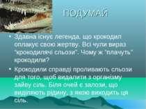 ПОДУМАЙ Здавна існує легенда, що крокодил оплакує свою жертву. Всі чули вираз...
