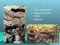 ОХОРОНА ПЛАЗУНІВ Гекон кримський Гадюка степова східна Мідянка