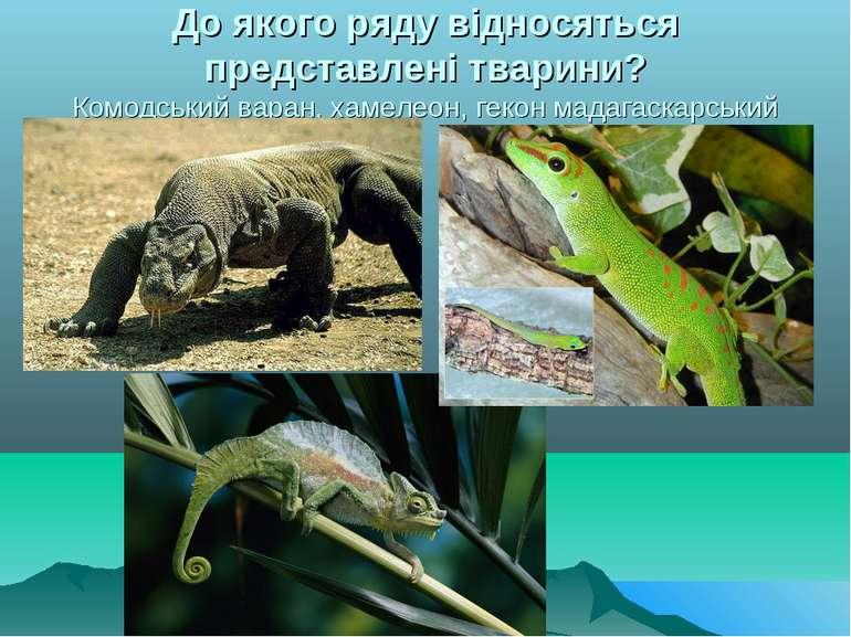 До якого ряду відносяться представлені тварини? Комодський варан, хамелеон, г...