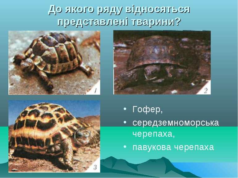 До якого ряду відносяться представлені тварини? Гофер, середземноморська чере...