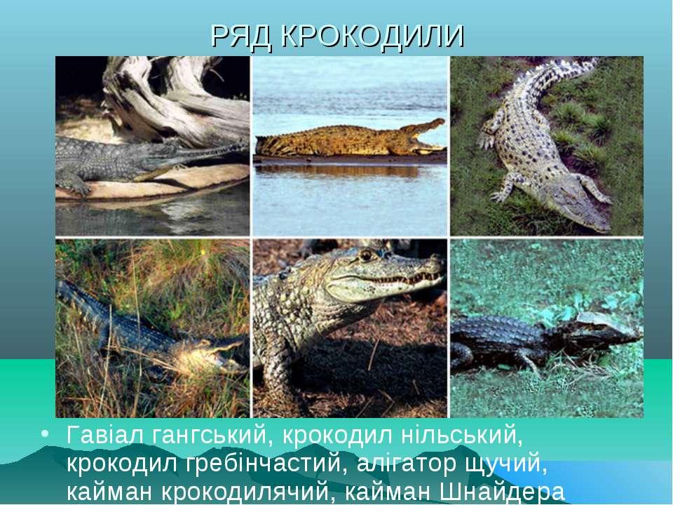 РЯД КРОКОДИЛИ Гавіал гангський, крокодил нільський, крокодил гребінчастий, ал...