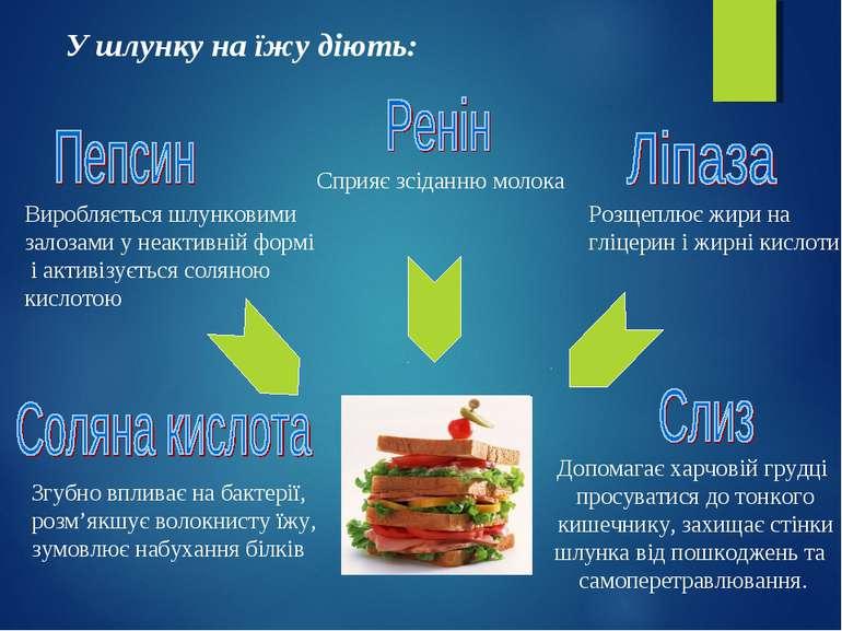 У шлунку на їжу діють: Виробляється шлунковими залозами у неактивній формі і ...
