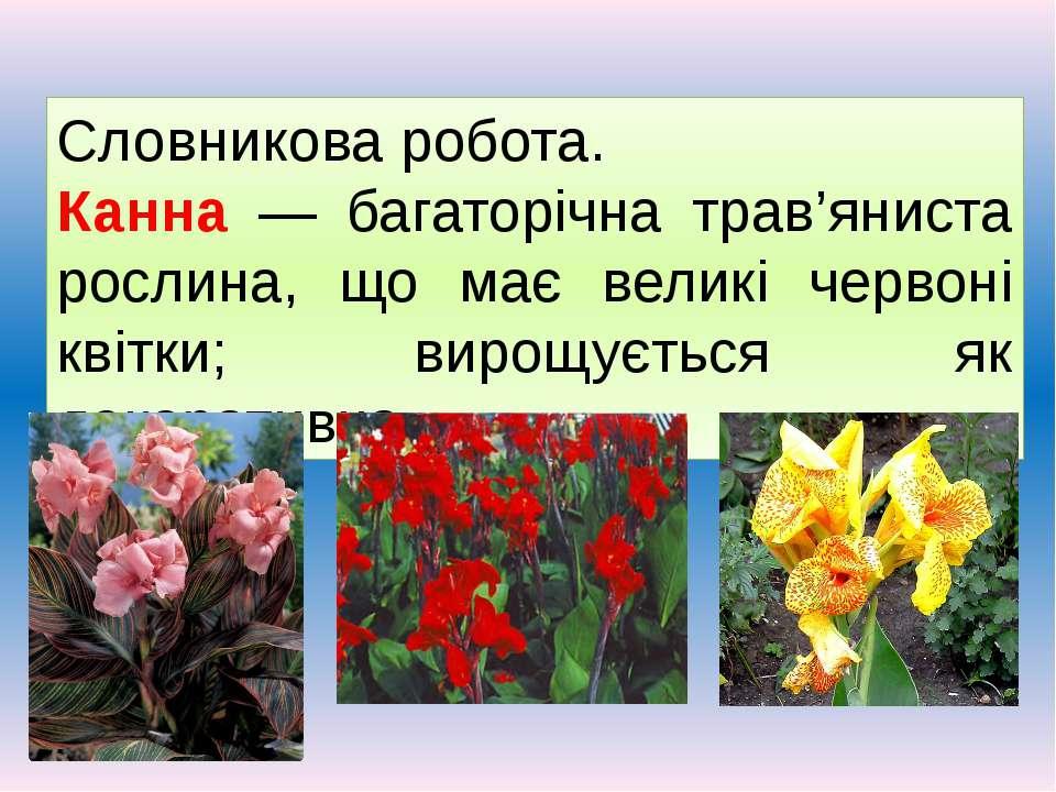 Словникова робота. Канна — багаторічна трав'яниста рослина, що має великі чер...