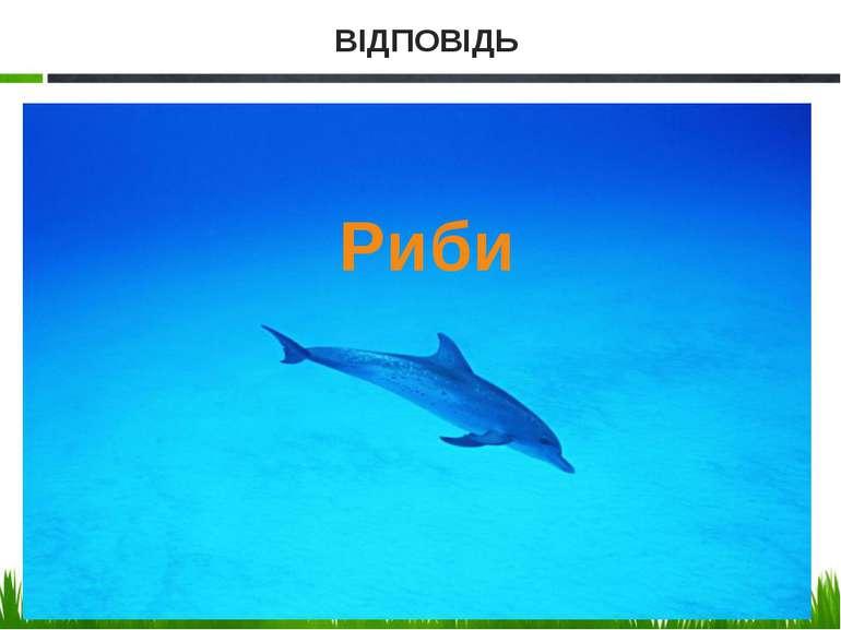Риби ВІДПОВІДЬ