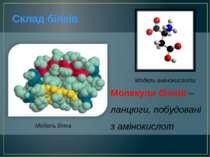 Молекули білків – ланцюги, побудовані з амінокислот Склад білків Модель білка...