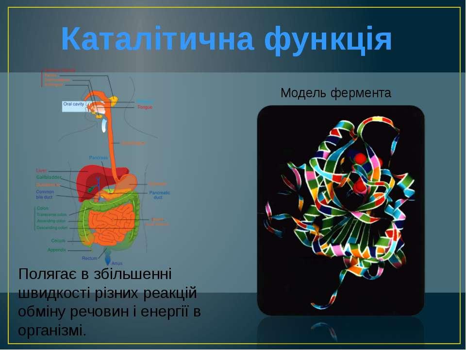Каталітична функція Модель фермента Полягає в збільшенні швидкості різних реа...
