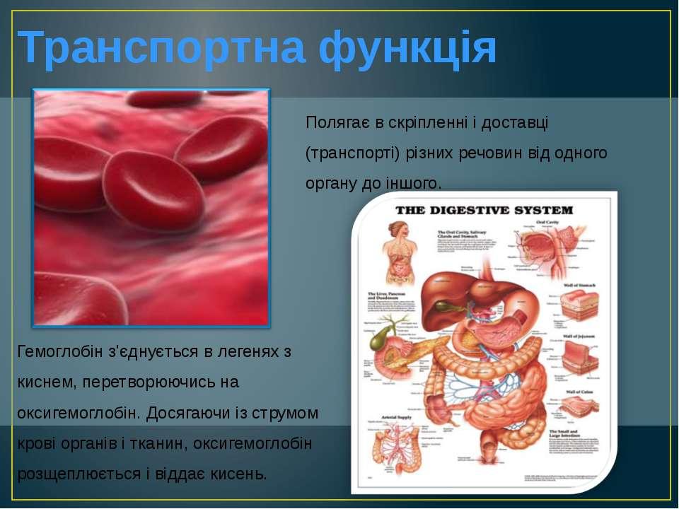 Транспортна функція Гемоглобін з'єднується в легенях з киснем, перетворюючись...