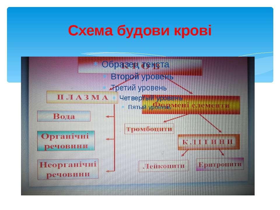 Схема будови крові