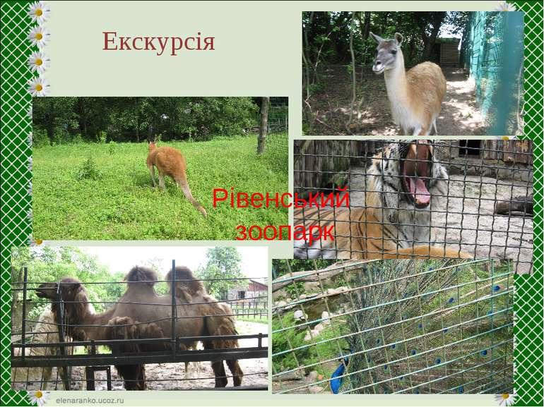 Екскурсія Рівенський зоопарк