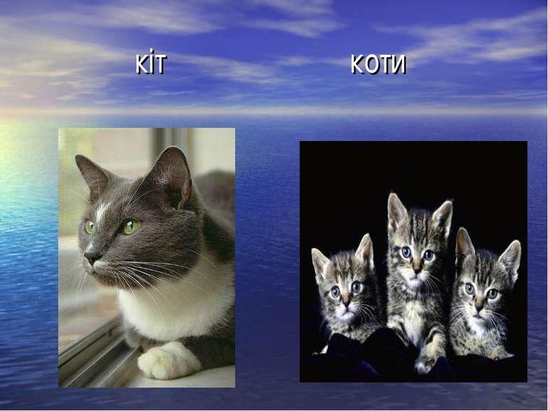 кіт коти