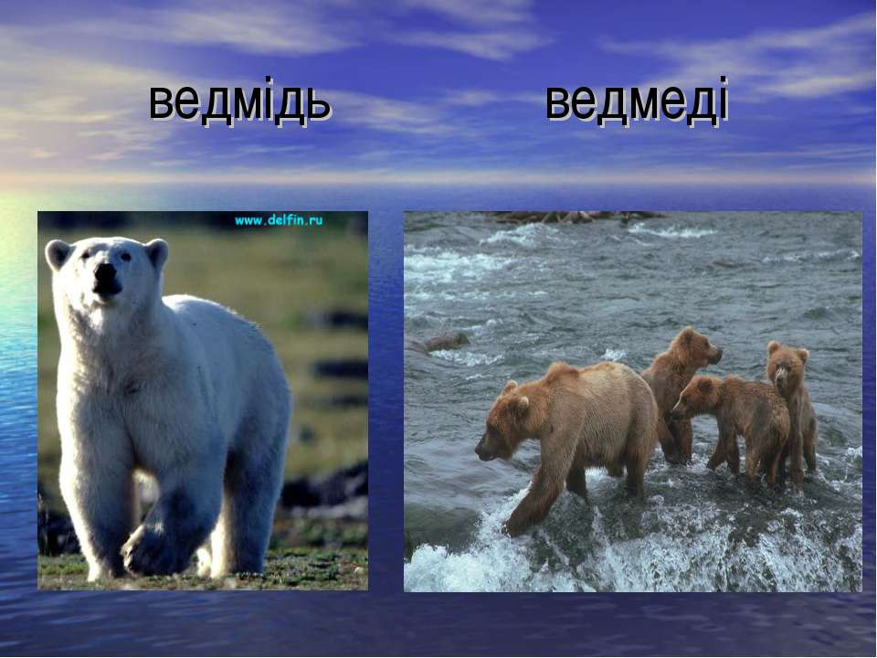 ведмідь ведмеді