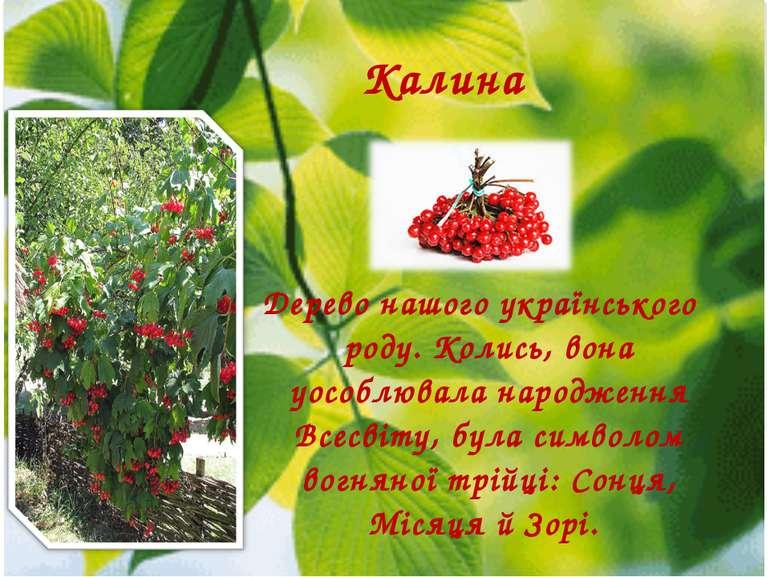 Дерево нашого українського роду. Колись, вона уособлювала народження Всесвіту...