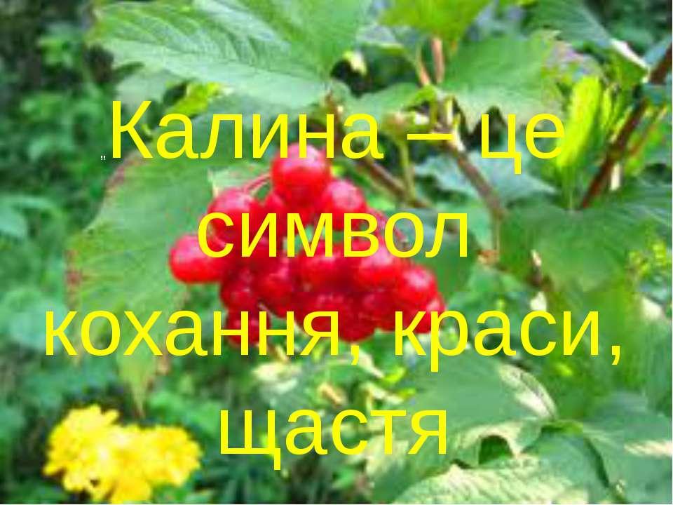 """Калина - символ кохання, краси, щастя """"Калина – це символ кохання, краси, щастя"""