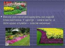 Високі рослини висаджують на задній план квітника. У центрі – нижчі квіти, а ...