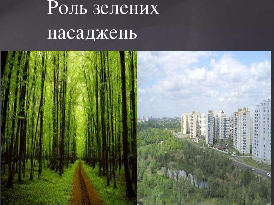 Роль зелених насаджень {