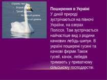 Поширення в Україні У дикій природі зустрічаються на півночі України, на озер...