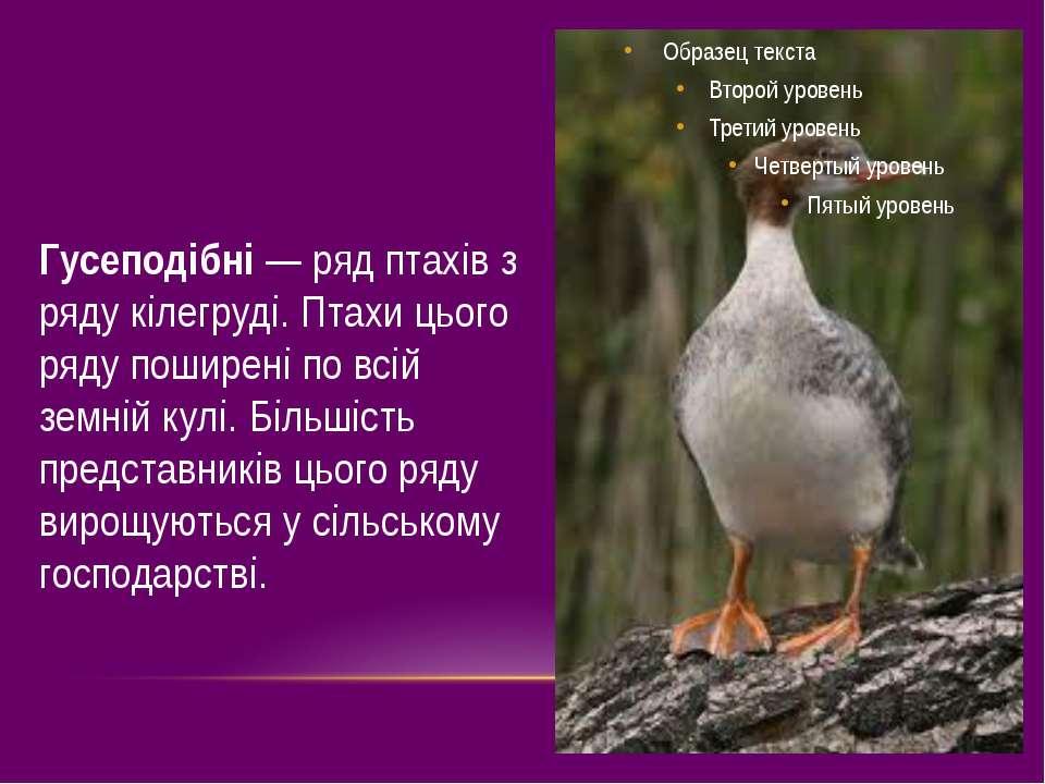 Гусеподібні — ряд птахів з ряду кілегруді. Птахи цього ряду поширені по всій ...