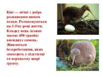 Ківі — нічні з добре розвиненим нюхом птахи. Розмножуються на 3-5му році житт...