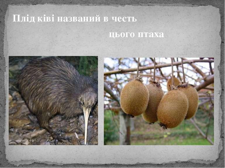 Плід ківі названий в честь цього птаха