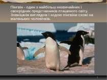 * Пінгвін - один з найбільш незвичайних і своєрідних представників пташиного ...