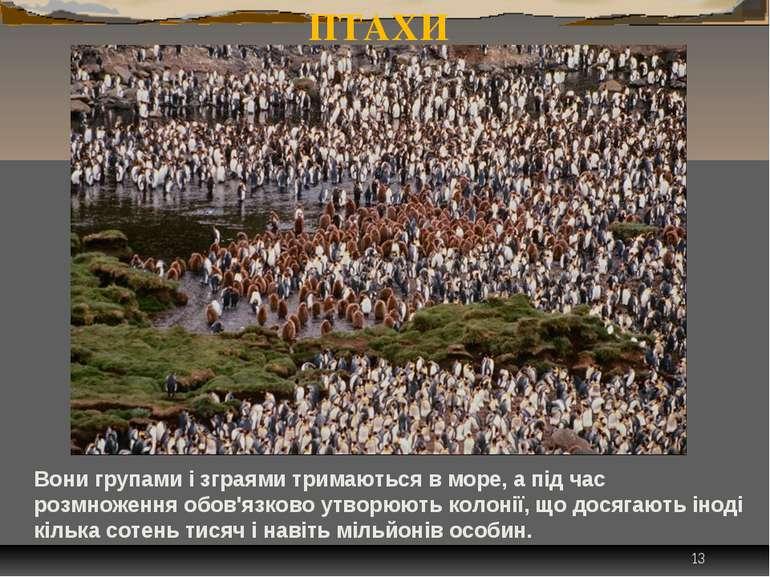 * ПІНГВІНИ - ГРОМАДСЬКІ ПТАХИ Вони групами і зграями тримаються в море, а під...