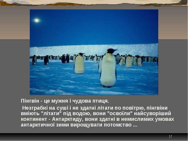* Пінгвін - це мужня і чудова птиця. Незграбні на суші і не здатні літати по ...
