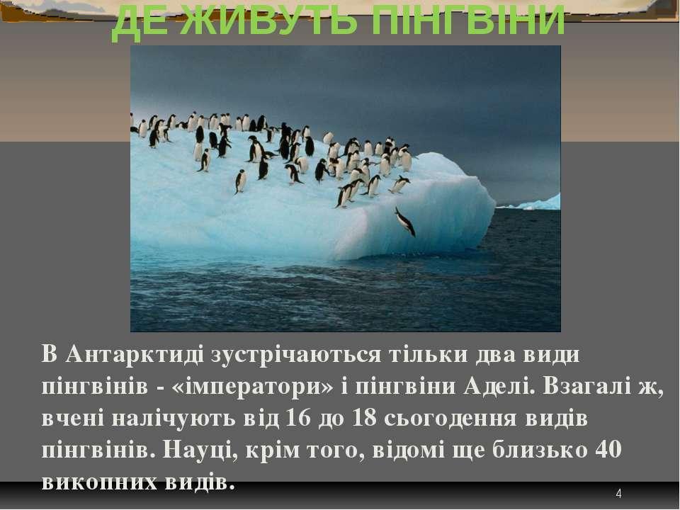 * ДЕ ЖИВУТЬ ПІНГВІНИ В Антарктиді зустрічаються тільки два види пінгвінів - «...
