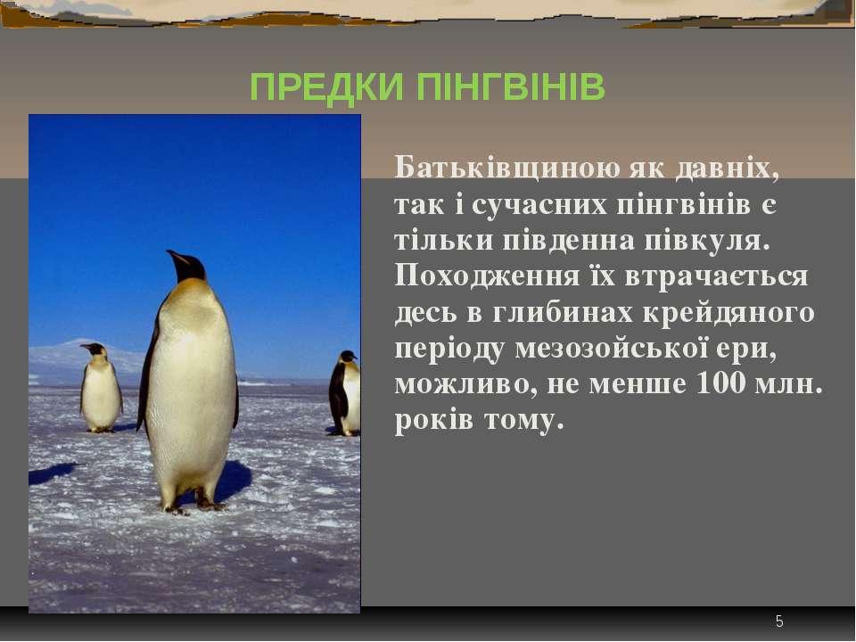 * Батьківщиною як давніх, так і сучасних пінгвінів є тільки південна півкуля....