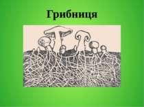 Грибниця