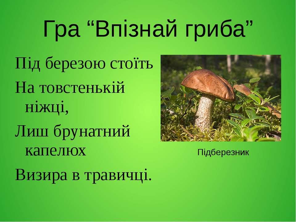 """Гра """"Впізнай гриба"""" Під березою стоїть На товстенькій ніжці, Лиш брунатний ка..."""