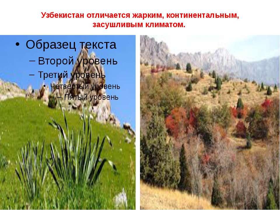 Узбекистан отличается жарким, континентальным, засушливым климатом.