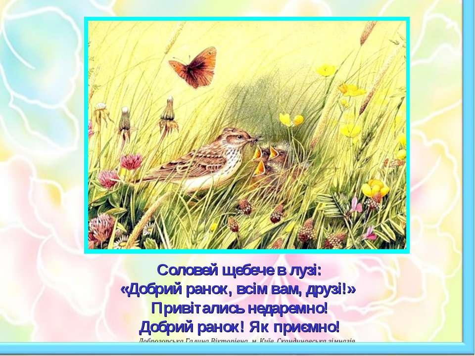 Соловей щебече в лузі: «Добрий ранок, всім вам, друзі!» Привітались недаремно...