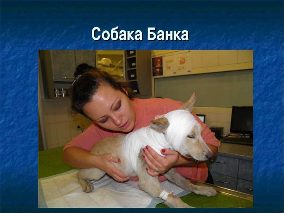 Собака Банка